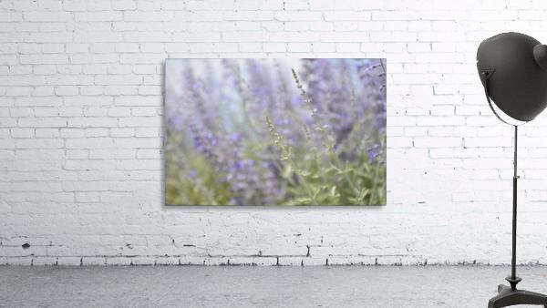 Soft Blue Spring Blossoms Photograph