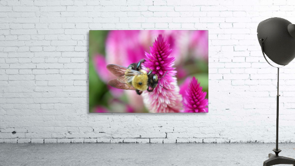 Bee On Pink Flower Photograph