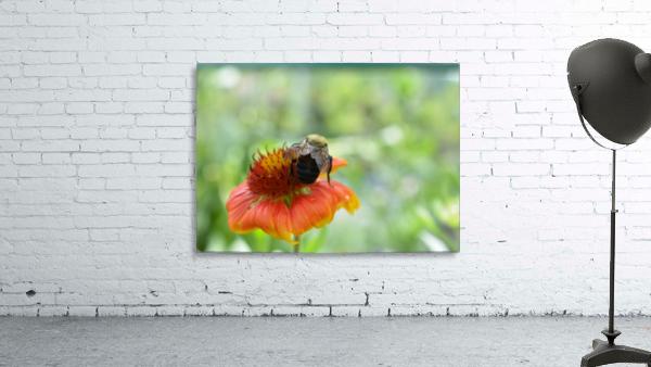 Bee On Orange Flower Photograph