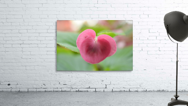 Heart Shape Pink Flower Photograph