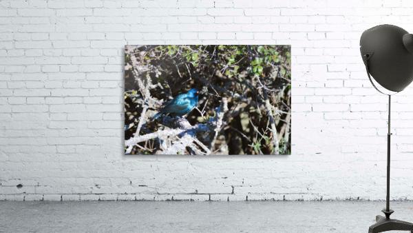Blue Reflective Bird