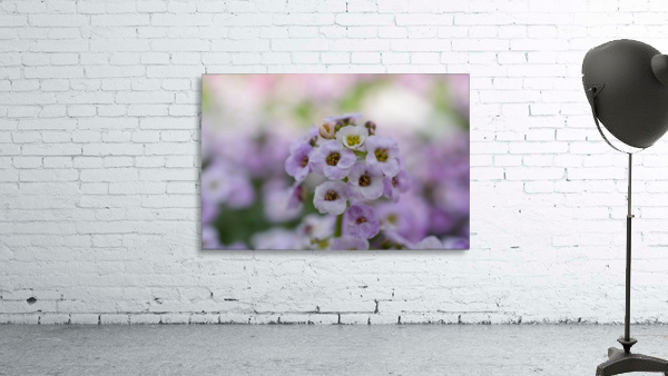 Small Purple White Flower Photograph