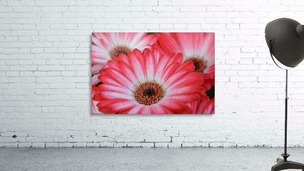 Red & White Flower Photograph
