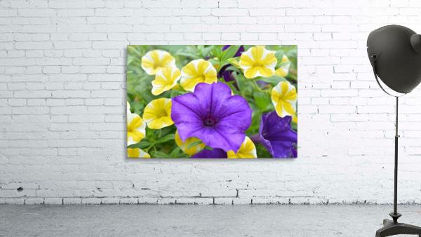 Beautiful Blue Flower In Yellow Flower Garden Photograph