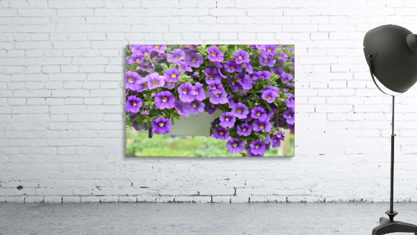 Beautiful Purple Flowers Photograph