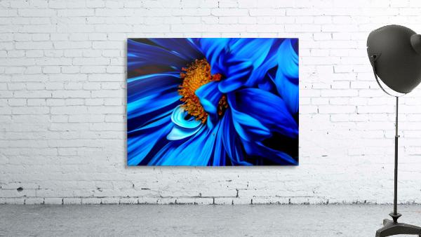 Beautiful Blue Flower_OSG