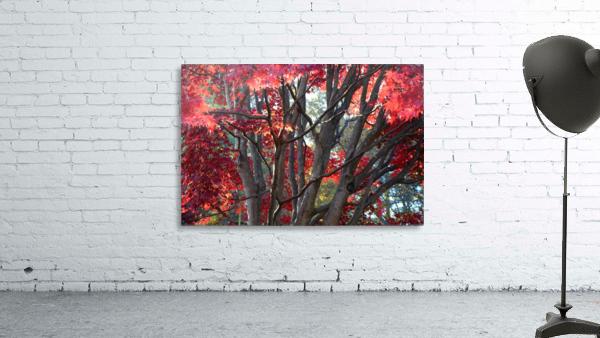 Beautiful Red Fall Foliage