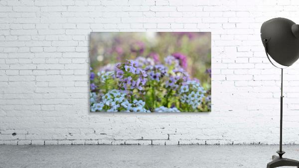Small Purple Flowers Photograph