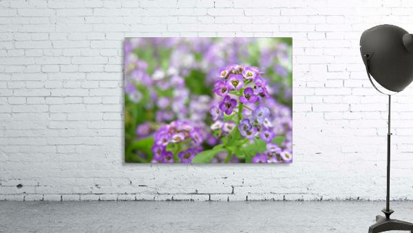 Beautiful Small Purple Flowers Photograph