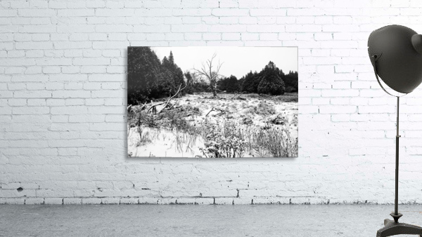 Quiet Winter Black And White