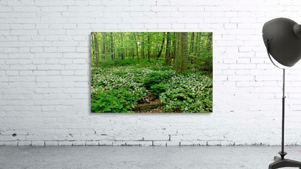 Trillium Woods VI