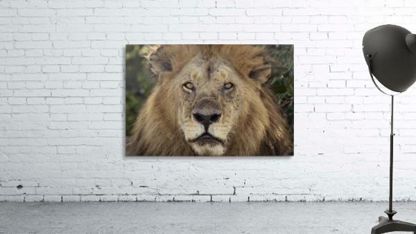 A Kings Portrait - color