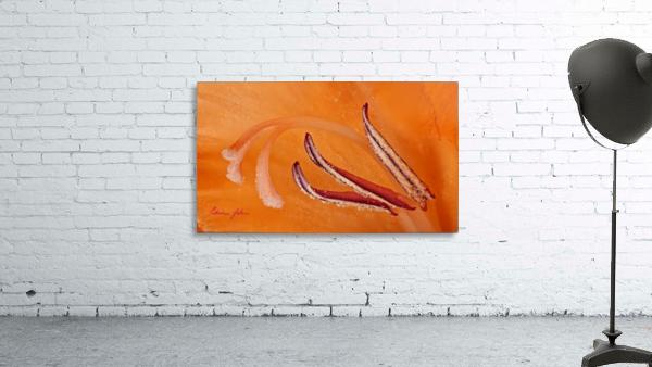Orange Gladiola Ultra Close Up of Stamens