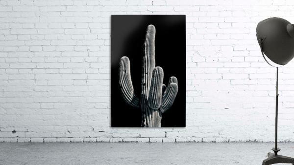 Saguaro 3