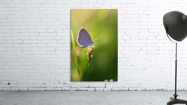 Gray butterfly perching on grass flower