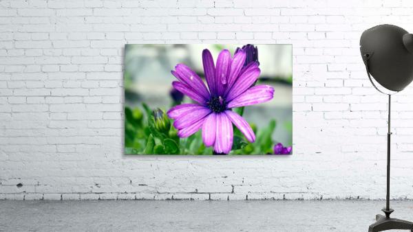 Waterdrop On Purple Flower