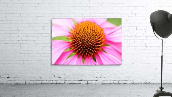 Hedgehog Coneflower