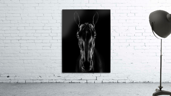 The Horse in Noir
