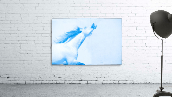 Blue Andalusian Horse 4