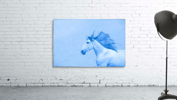 Blue Andalusian Horse 2