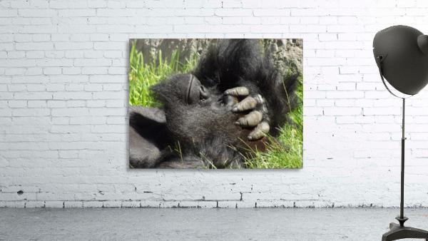 Gorilla Headache