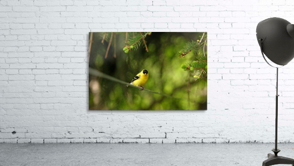 Goldfinch On The Disappearing Line