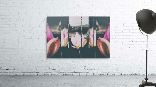 Pink Lotus Collage