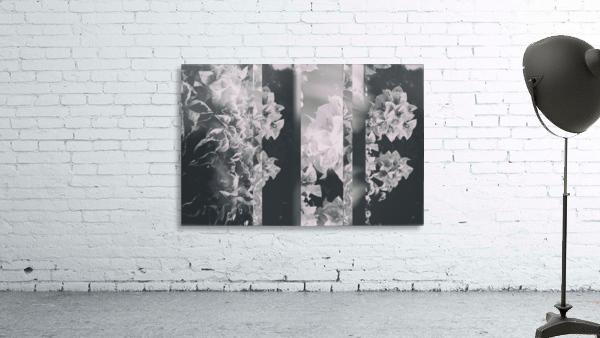 Bougainvillea Collage B&W