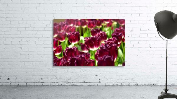 Plants - Flowers - 006