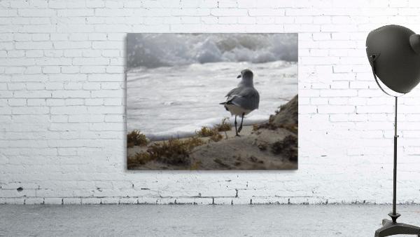 Seagull running