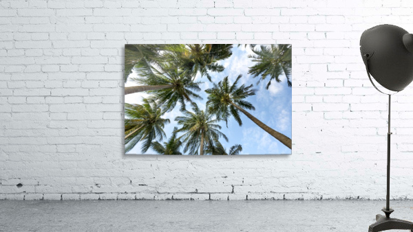 palm trees, sky, palms, background, summer, tropical, nature, holidays, travel, paradise, outdoors,