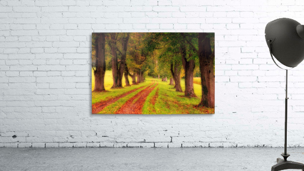 tree, avenue, nature, landscape, tree lined avenue, away, distance, trail, autumn, leaves, forest, green, mood, green leaves, lane, path,