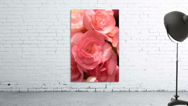 Pink pastel flower