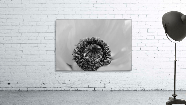 Poppy Whorl Black And White