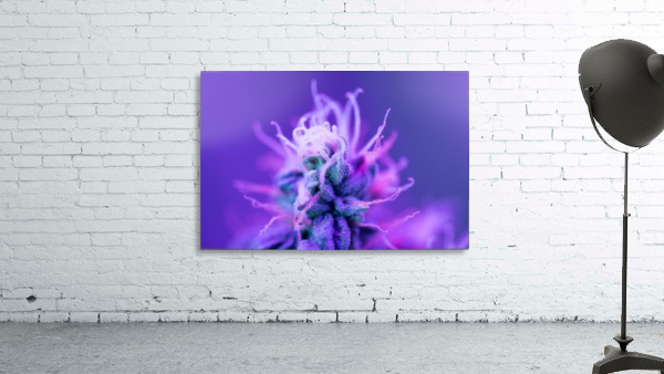 FloweringPhase