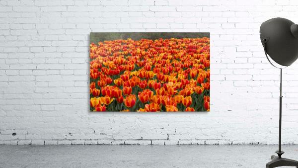 Ottawa Tulip Festival 9