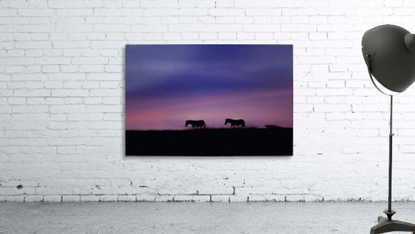 Zebra Sunrise