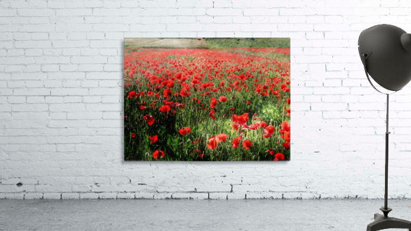 Rolling Fields with Poppies