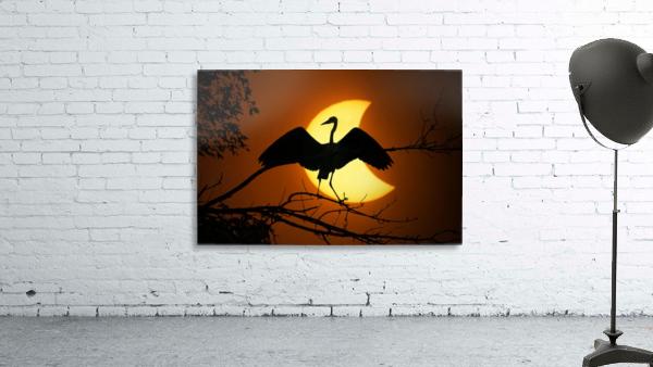 Egret Eclipse
