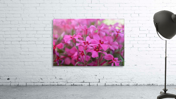Pink Flowers Photograph