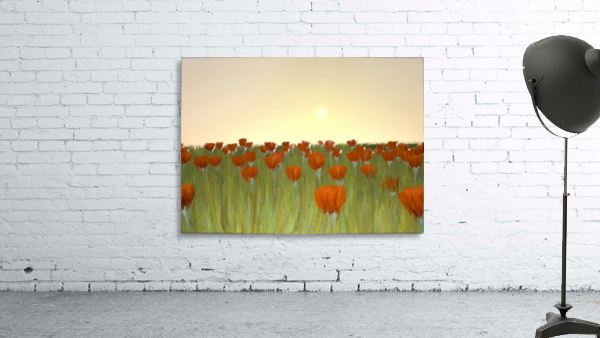 RED POPPIES at Sunset
