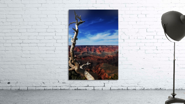 Grand Canyon framed by tree