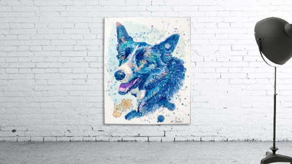 Border Collie Dog - Portrait of Habbey