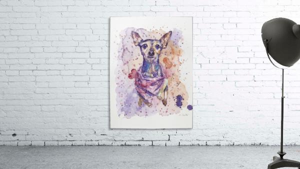 Chihuahua - Portrait of Gigi