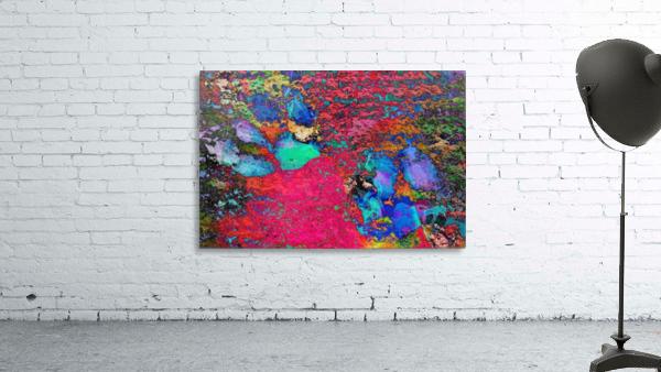Paw Prints Colour Explosion