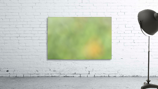 Abstract Art Bokeh - greens and yellow