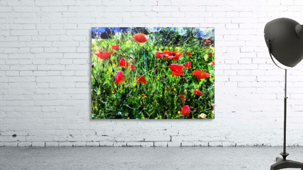 Green Pasture With Red Poppies