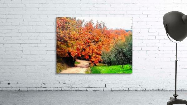 Autumn Golden Colours Umbria