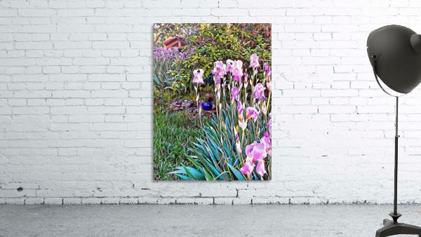 My Secret Iris Garden