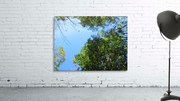 Landscape (200)